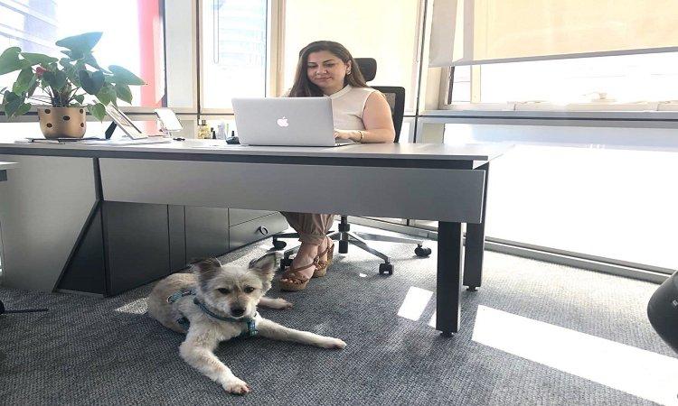 Ofise Evcil Hayvanlarıyla Geliyorlar