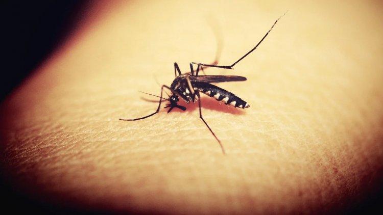 DSÖ, Dünyanın İlk Sıtma Aşısına Onay Verdi