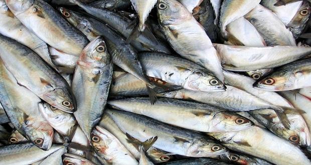 Balık Nasıl Saklanmalı ve Pişirilmeli